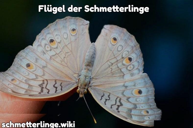Flügel der Schmetterlinge
