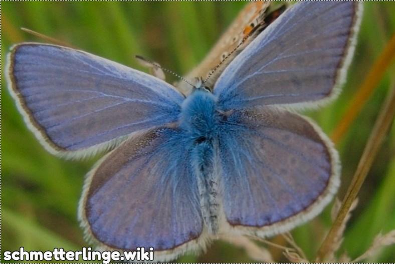 Schmetterlinge Farben